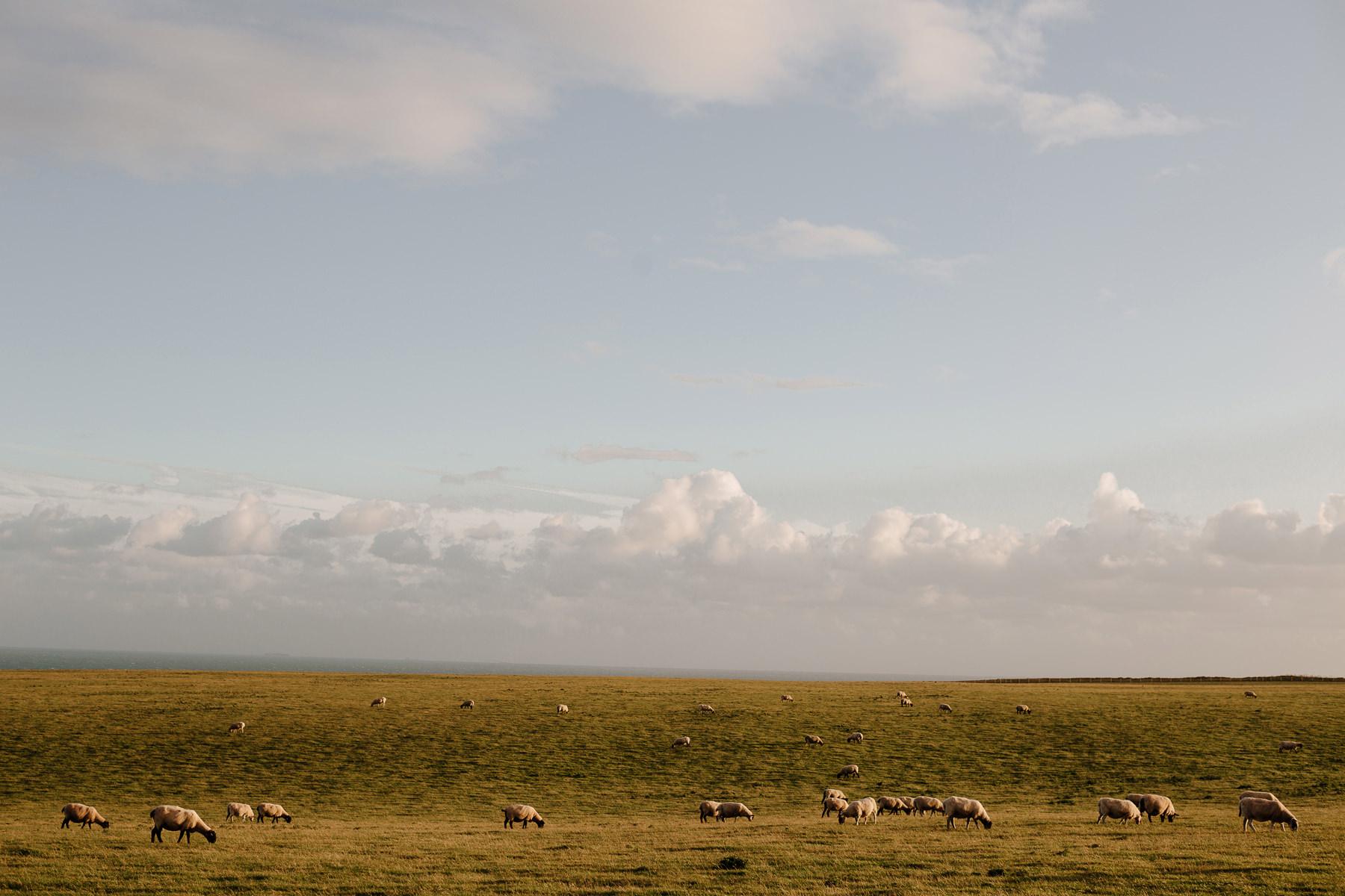 angielskie krajobrazy owce