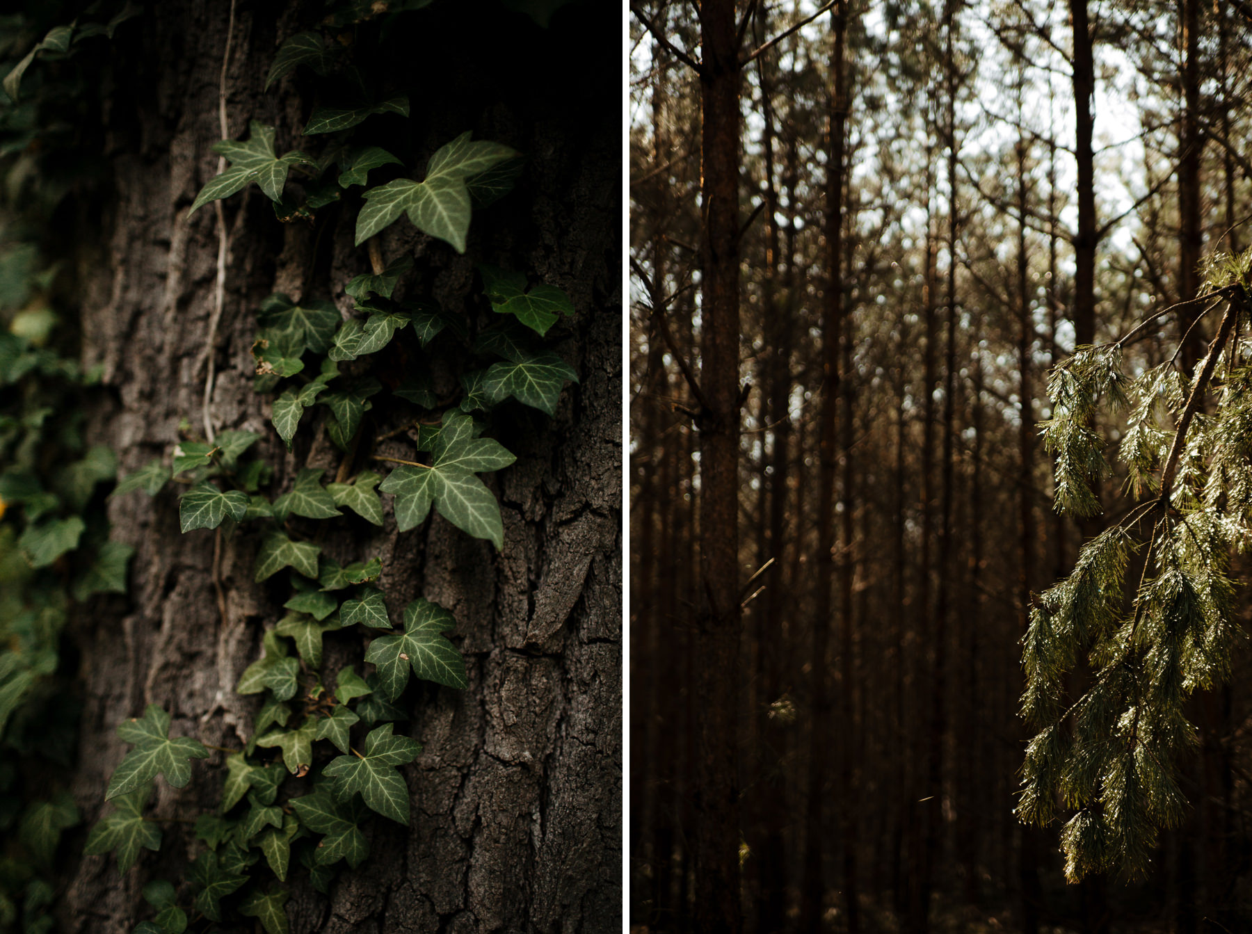 sesja w lesie stargard