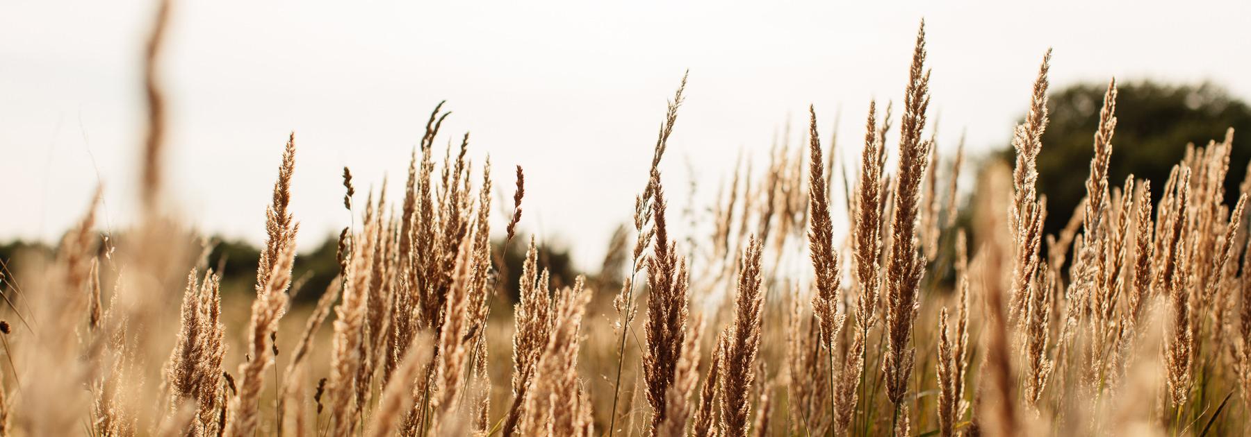 trawy nad morzem