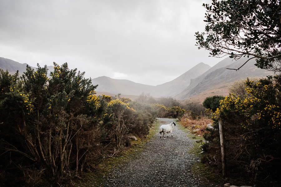 irlandia killarney national park góry
